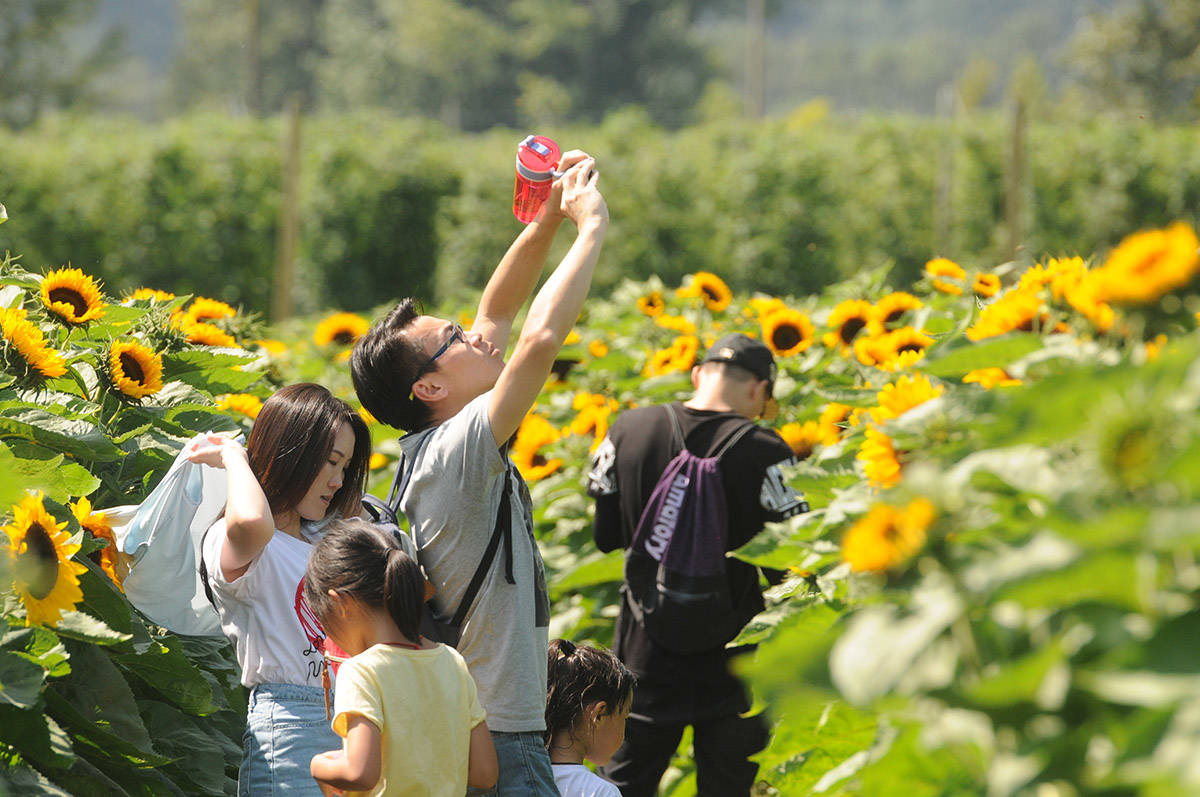 People take photos of the view during the second annual Chilliwack Sunflower Festival on Saturday, Aug. 3, 2019. (Jenna Hauck/ Chilliwack Progress file)