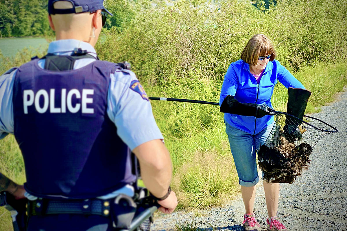A bald eagle was rescued by the OWL – Orphaned Wildlife Rehabilitation Society – on Thursday, July 15, 2021. (RCMP/Special to The News)