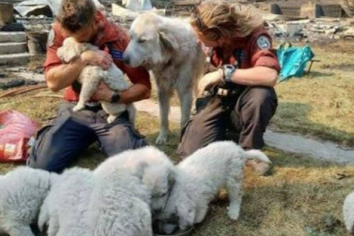 Wildfire rescues pets in Lytton. (GoFundMe)