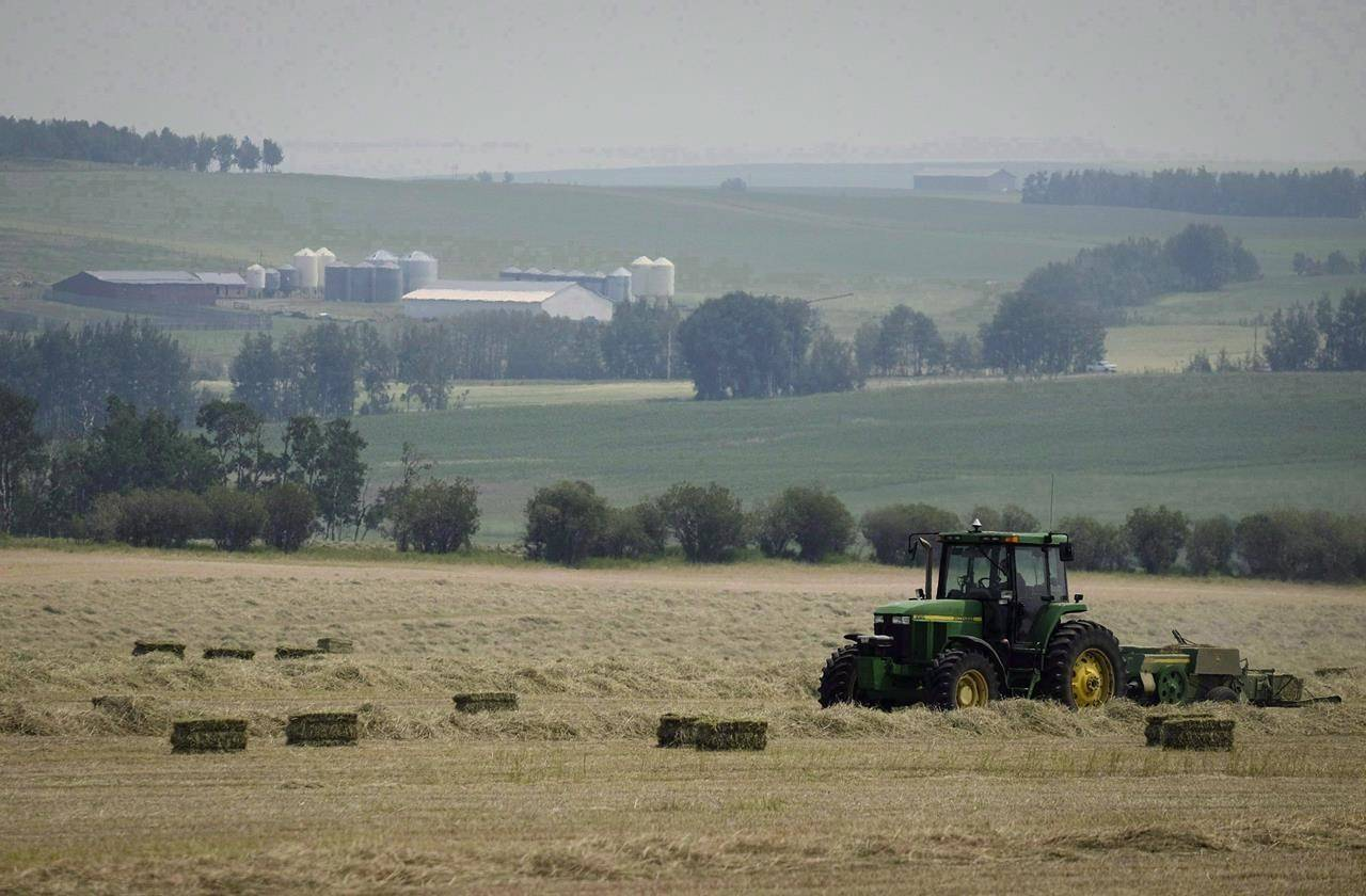 Farm hand Connor Hunt bales a hay crop near Cremona, Alta., Monday, July 17, 2017. Farmers are calling for emergency relief as drought ravages crops across the Prairie provinces. THE CANADIAN PRESS/Jeff McIntosh