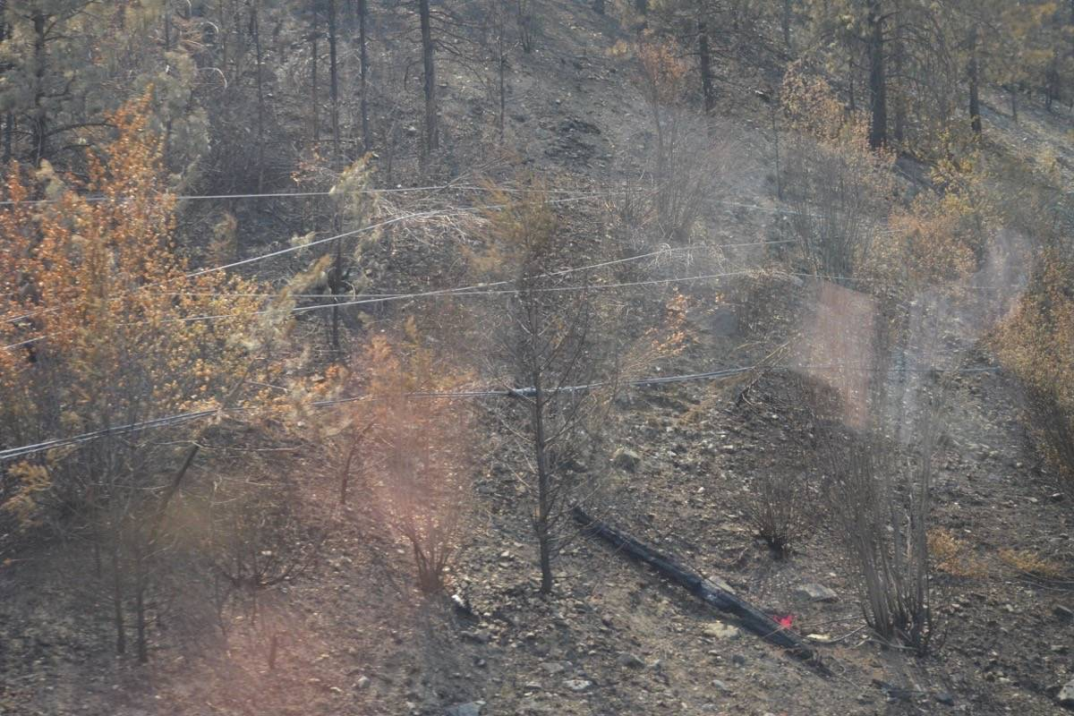 Downed power lines beside Highway 1 north of Lytton, July 9, 2021. (Photo credit: Barbara Roden)