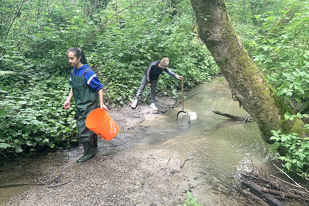 Students recently collected specimen samples and photographs in Munday Creek. (Tim Stephenson/Special to Langley Advance Times)