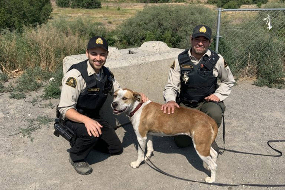 Two officers with a dog who was found after the Lytton fire. (Contributed/BC SPCA)