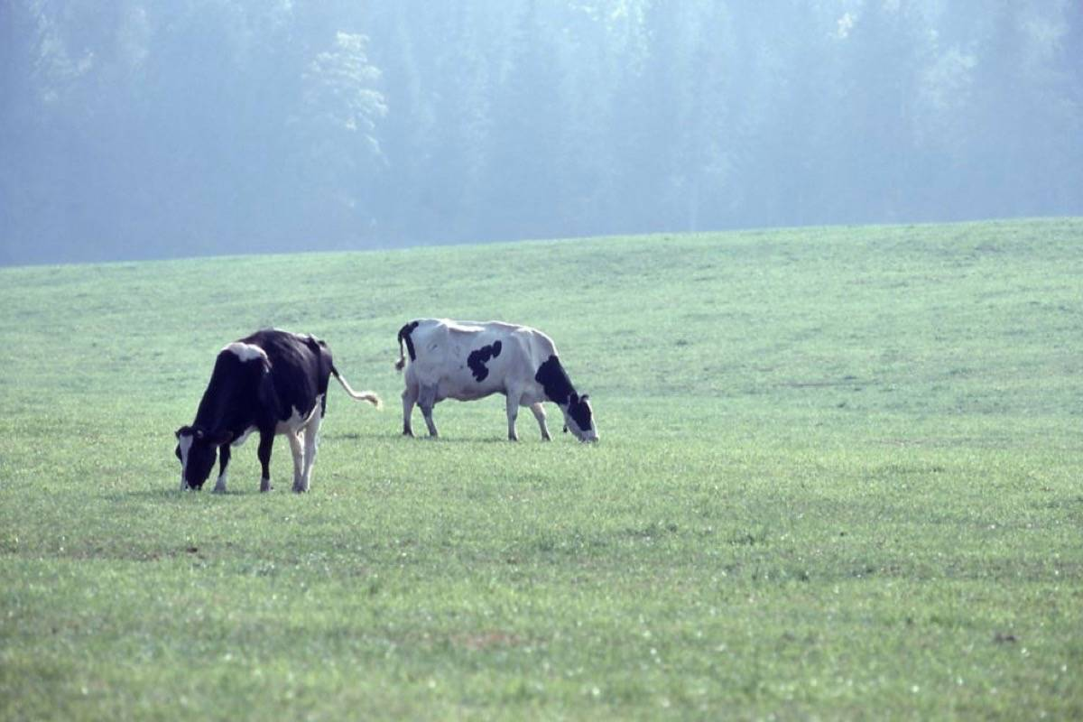 Farmgate sales of meat have been restricted in B.C. since new federal rules took effect in 2001. (B.C. government photo)