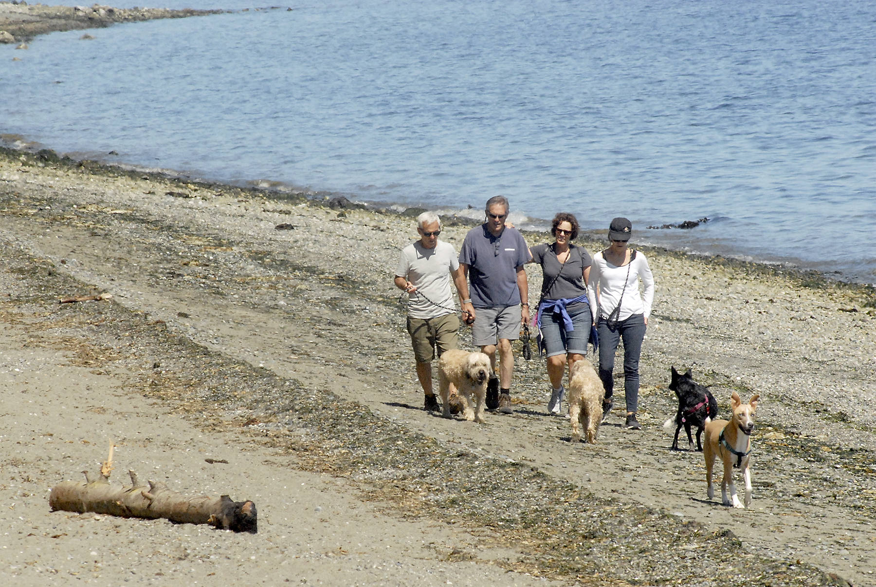Beach walkers on Sequim Bay on the North Olympic Peninsula in Washington state. (Keith Thorpe/Peninsula Daily News)