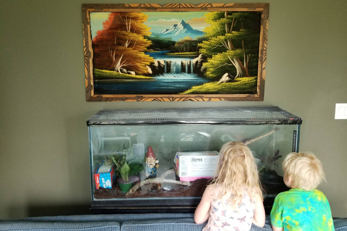 Michael Hathaway's children check out their new guest. Hathaway says the family will keep the snake if the owner can't be found. Photo: Submitted