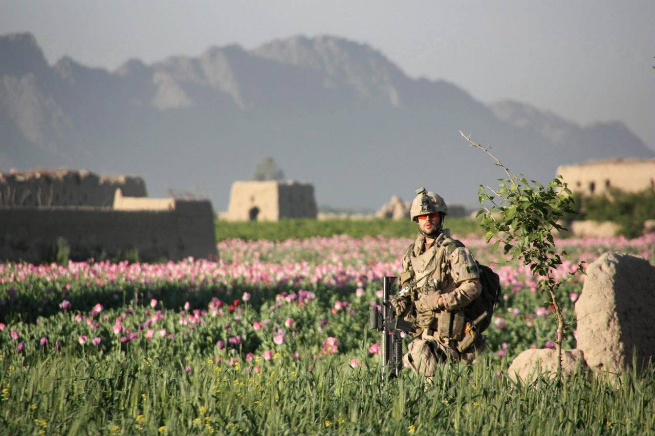 A Canadian soldier walks in a poppy field south of Bazar-e Panjwaii, Afghanistan, on Wednesday, April 20, 2011. Former Afghan interpreters now living in Canada are pleading for the federal government to help extended family members still stuck in Afghanistan. THE CANADIAN PRESS/Colin Perkel