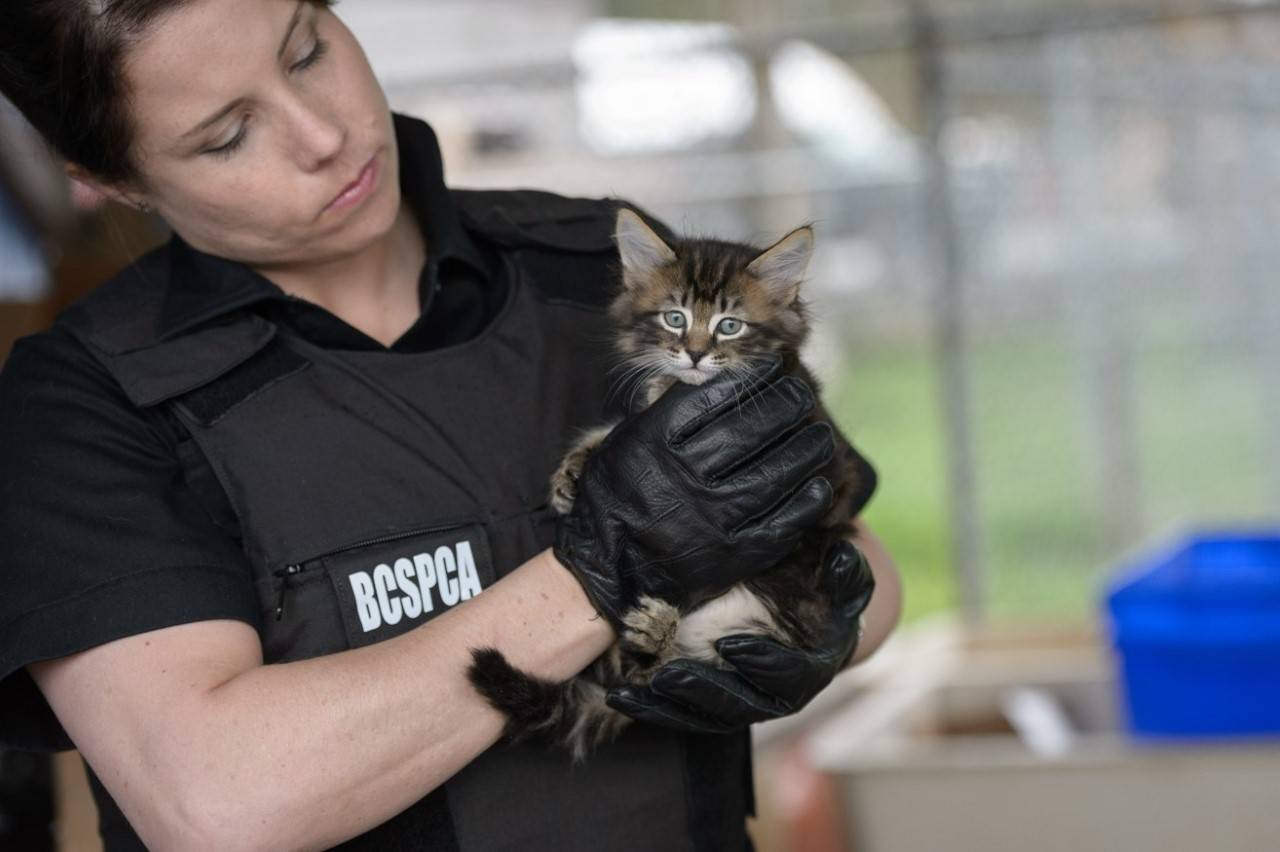 BC SPCA special constables seizing kitten/ dog. (supplied image)
