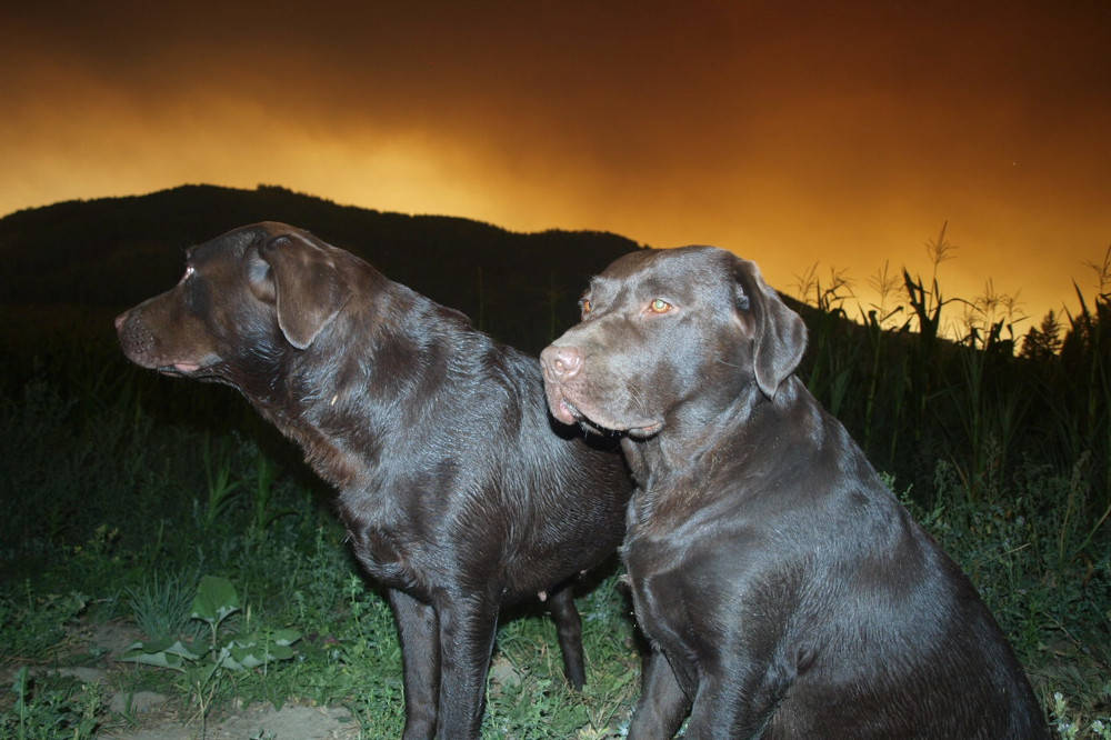 Two Lumby dogs, Hope and Star, were not big fans of the fiery skies on Friday evening, Aug. 6, 2021. (Susie Heal Catt - Facebook)