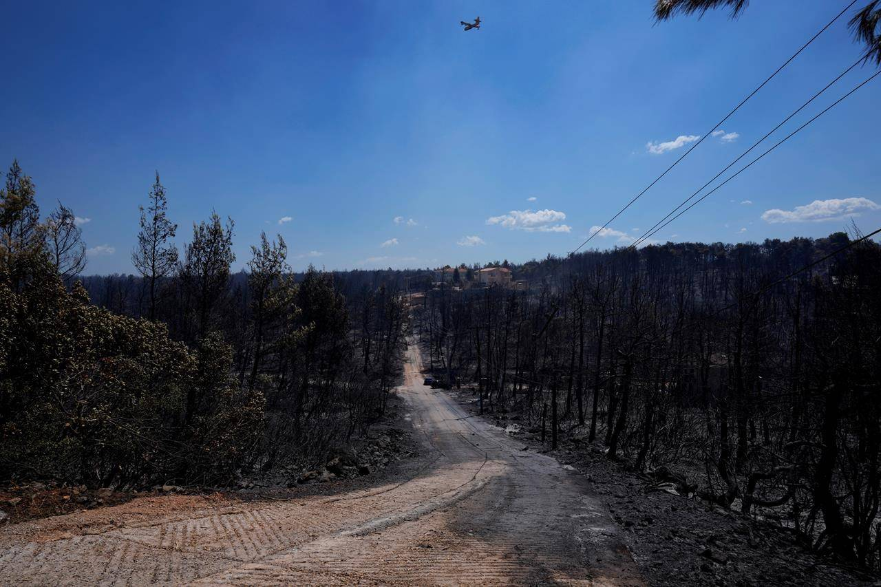 A firefighter aircraft fly over a burn area during a wildfire near Ipokratios Politia, in northern Athens, Greece, Saturday, Aug. 7, 2021. Wildfires rampaged through massive swathes of Greece's last remaining forests for yet another day Saturday, encroaching on inhabited areas and burning scores of homes, businesses and farmland. (AP Photo/Petros Karadjias)