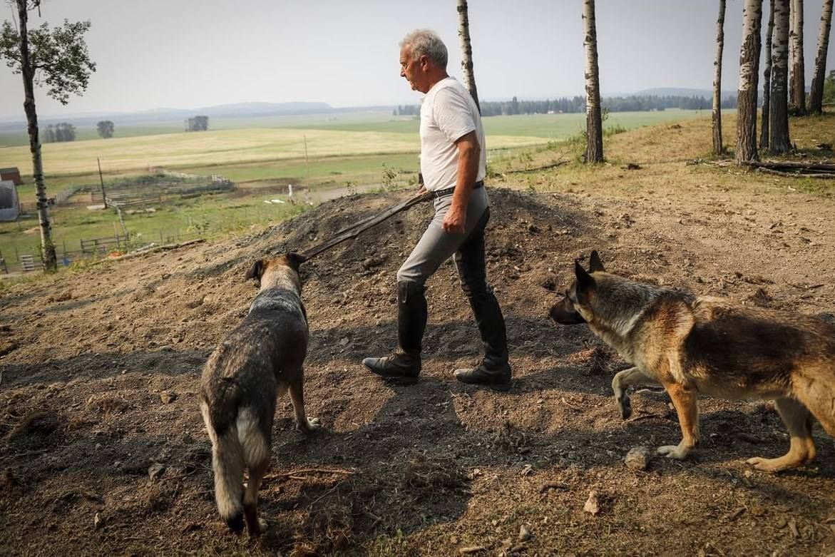 Horse trainer Ian Tipton walks with his dogs past the burial mound where his two horses Jacinto and Cipato are buried at his facility near Sundre, Alta., Thursday, Aug. 5, 2021.THE CANADIAN PRESS/Jeff McIntosh