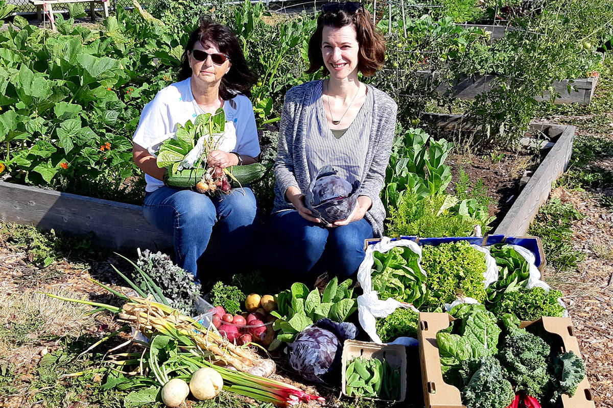 Patsy Kristen at the Aldergrove Community Gardens with their many fresh grown items to donate to the Aldergrove Food Bank. (Special to The Star)