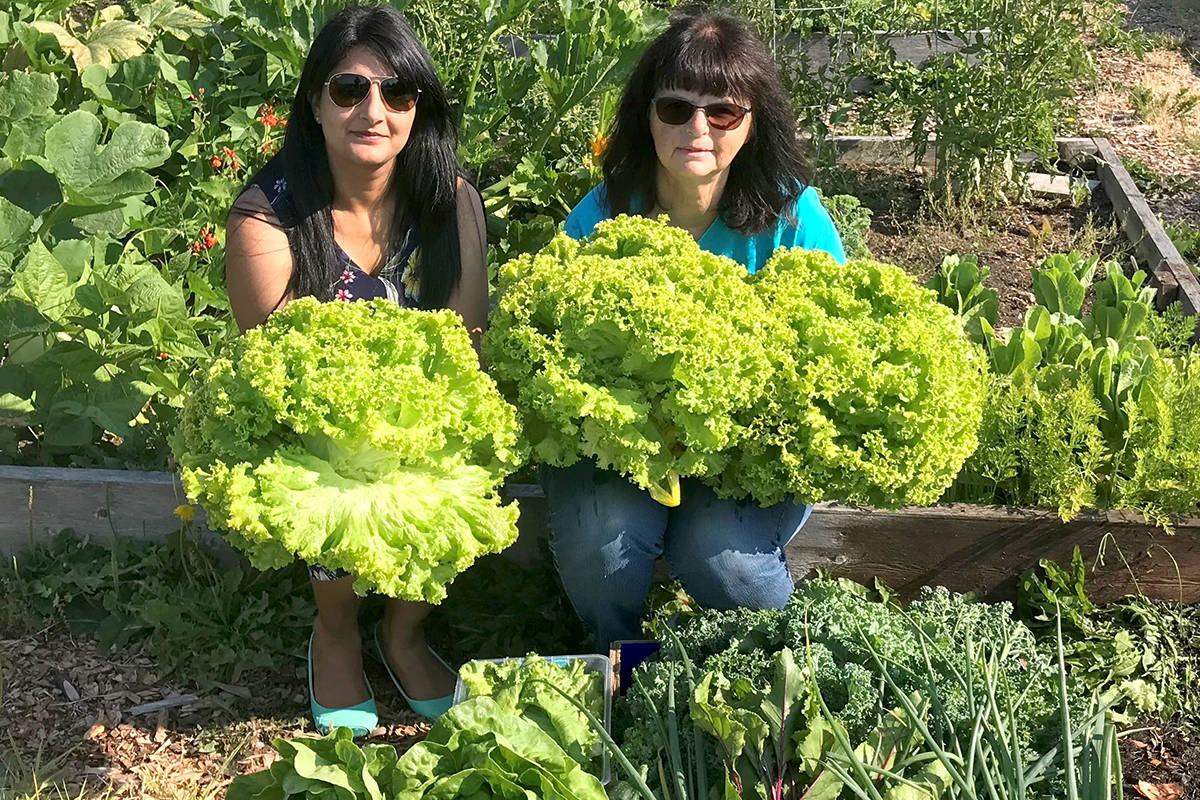 Sonya from Aldergrove Financial and Patsy of the Aldergrove Community Garden committee proudly show off their lettuce harvested for the Aldergrove Food Bank. (Special to The Star)