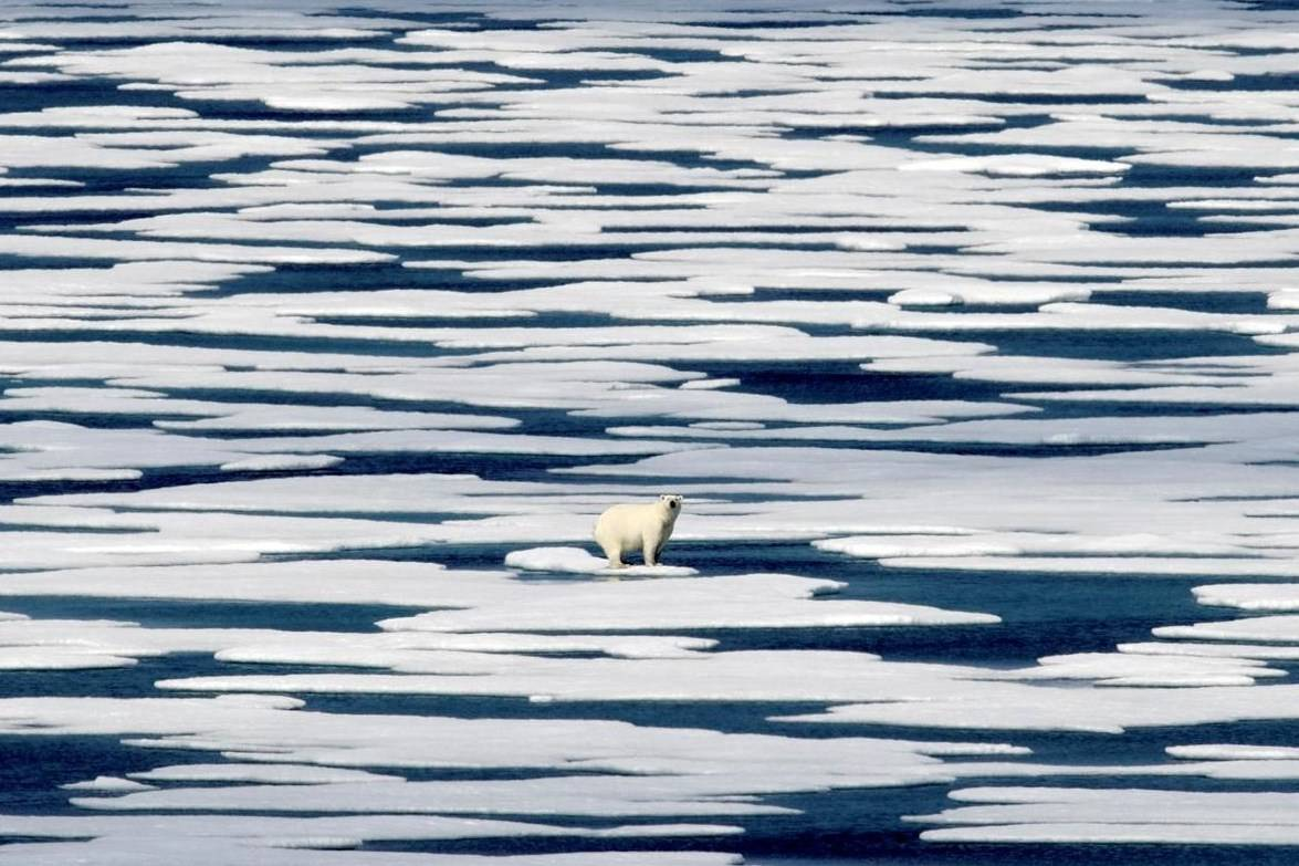 A polar bear stands on the ice in the Franklin Strait in the Canadian Arctic Archipelag on Saturday, July 22, 2017. Three people are in hospital after a polar bear attack in Sanirajak, in Nunavut's Baffin region. THE CANADIAN PRESS/AP-David Goldman