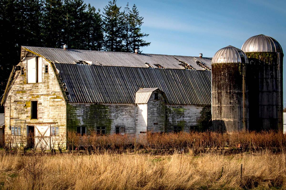 A rustic barn in rural Aldergrove. (Mariana Aramburu/Special to The Star)
