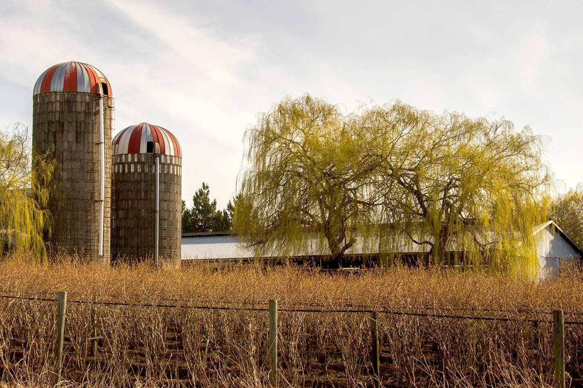 A farm in rural Aldergrove on 264 Street. (Mariana Aramburu/Special to The Star)