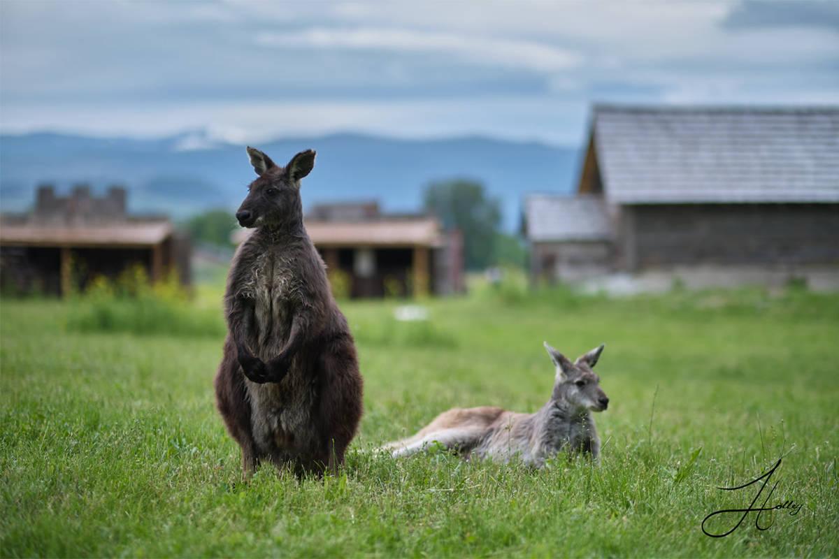 Kangaroo Creek Farm will open on April 29 for the season. (Kangaroo Creek Farm/Facebook)