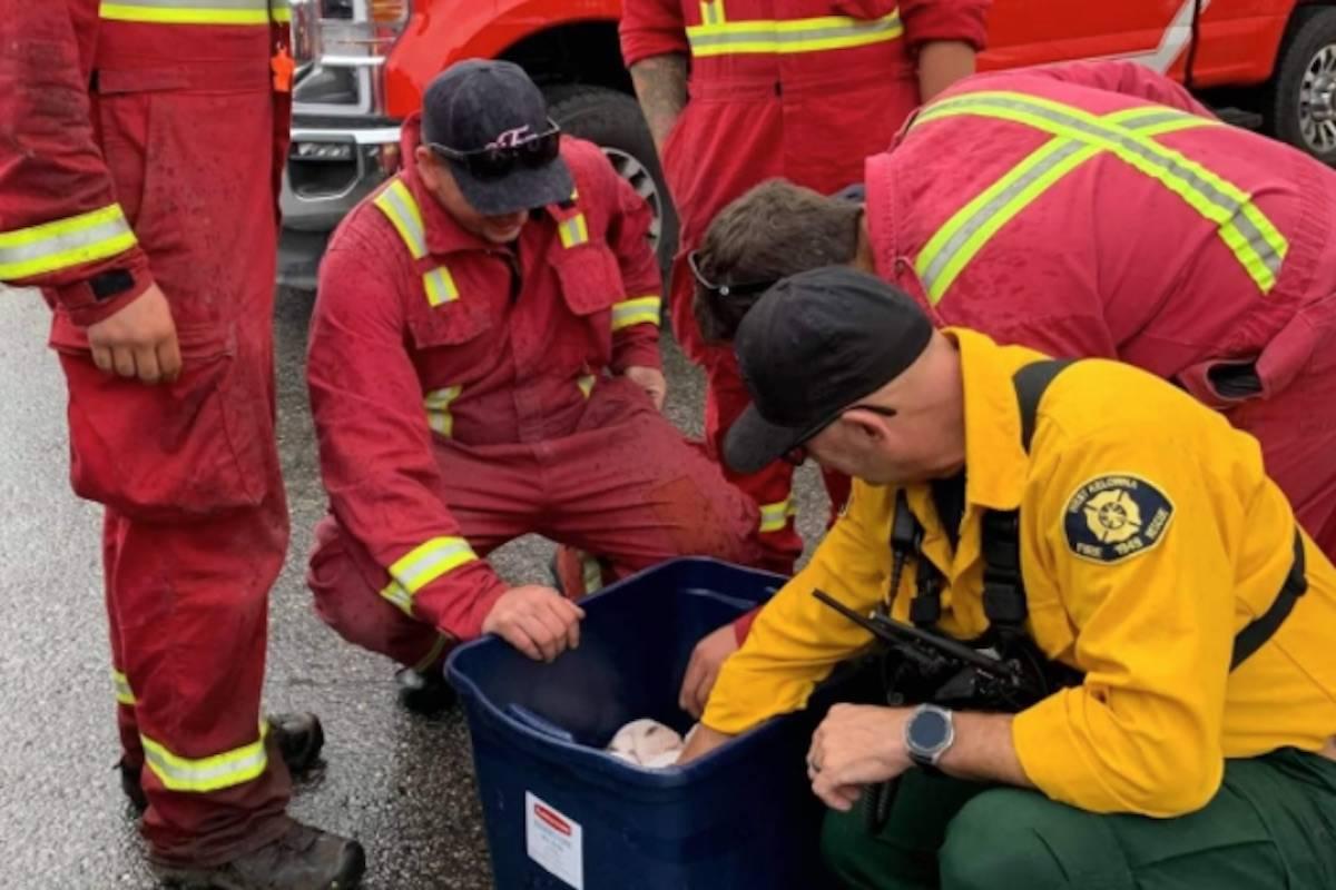 Firefighters cuddle puppies in West Kelowna. (Facebook)