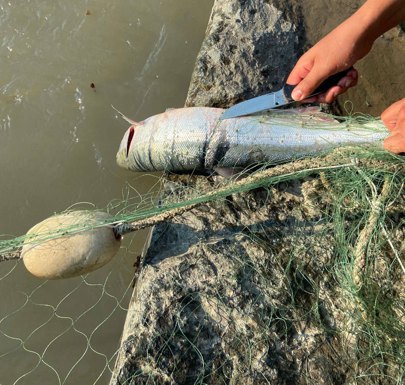 Between 200 and 250 illegal fishing nets have been seized on the Fraser River by DFO so far this year. (DFO)