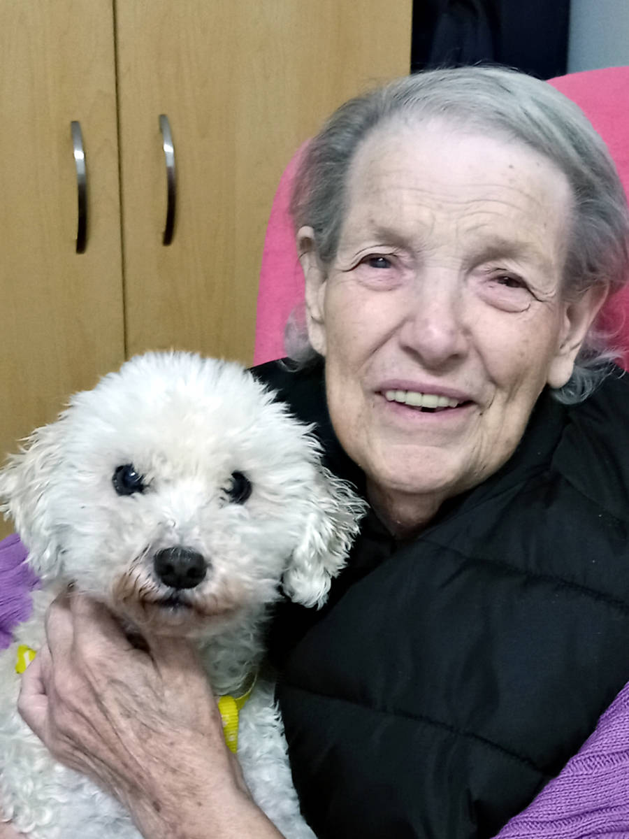 On Wednesday, Aug. 18, Romeo, a 12-year-old Maltese Poodle-cross, went missing from the backyard of his Walnut Grove home, triggering a search effort that saw residents of the Langley neighbourhood come out in droves. (Special to Langley Advance Times)