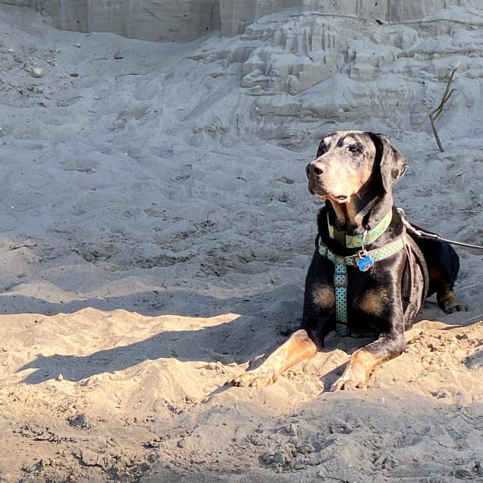 City of Langley Mayor Val van den Broek shared this photo of Bentley, a rescue from Skagit Valley, Wash.