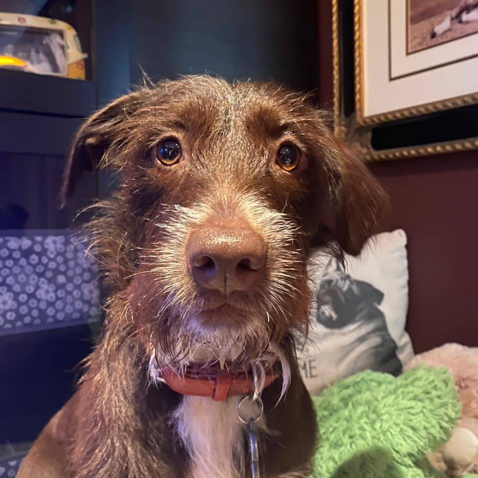 City of Langley Mayor Val van den Broek shared this photo of Razzle, a rescue from Puerto Vallarta, Mexico.