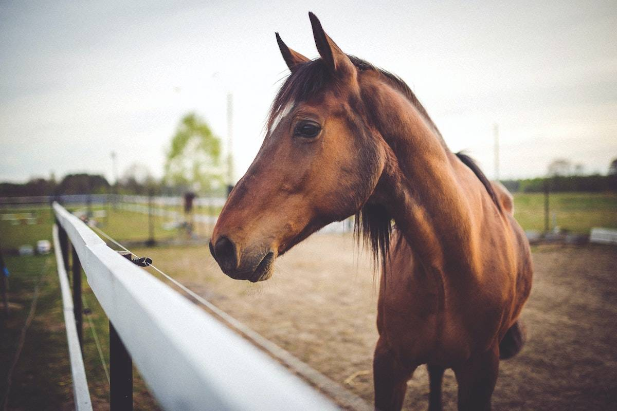 Ivermectin is a medication that is used to treat parasite infestations in dogs, cats and large animals. While a form of ivermectin that is safe for human consumption exists, it is not approved to treat or prevent COVID-19. (Pexels)