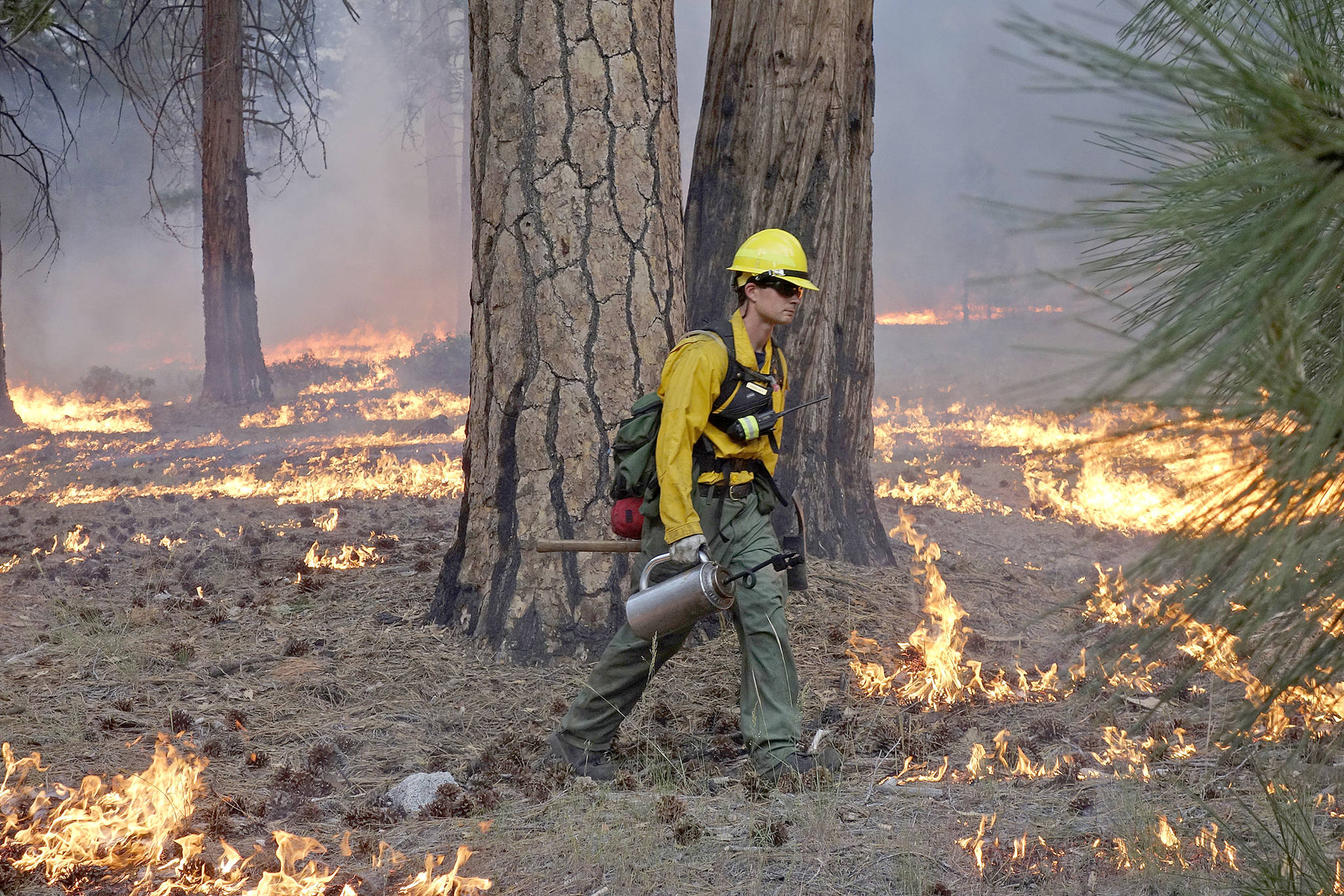 Firefighter Andrew Pettit walks among the flames during a control burn on June 11, 2019 in Cedar Grove at Kings Canyon National Park, California. (Brian Melley/The Associated Press)