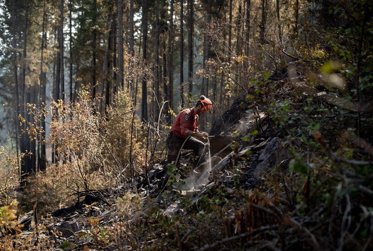 Wildland firefighter Ty Feldinger works on steep terrain to put out hot spots remaining from a controlled burn the B.C. Wildfire Service conducted to help contain the White Rock Lake wildfire on Okanagan Indian Band land, northwest of Vernon, B.C., on Wednesday, August 25, 2021. THE CANADIAN PRESS/Darryl Dyck
