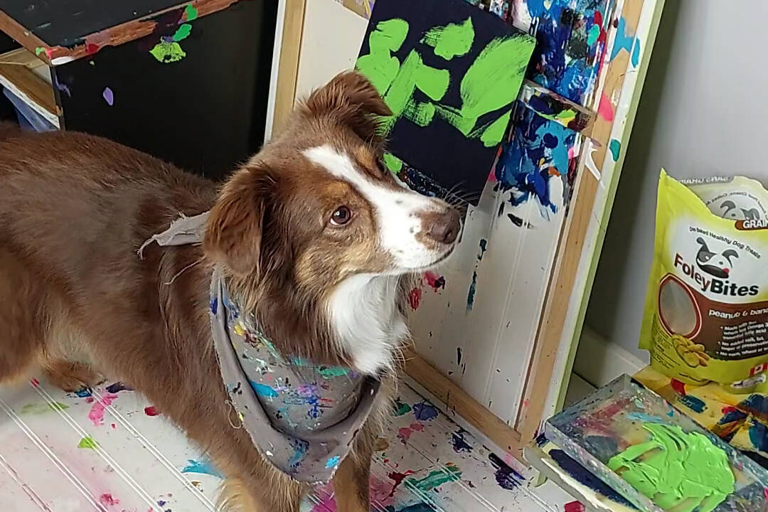 'Rogan the Painting Dog' creates artwork featured on Foley Dog Treat Company packaging as part of a charitable partnership. (Photo submitted)