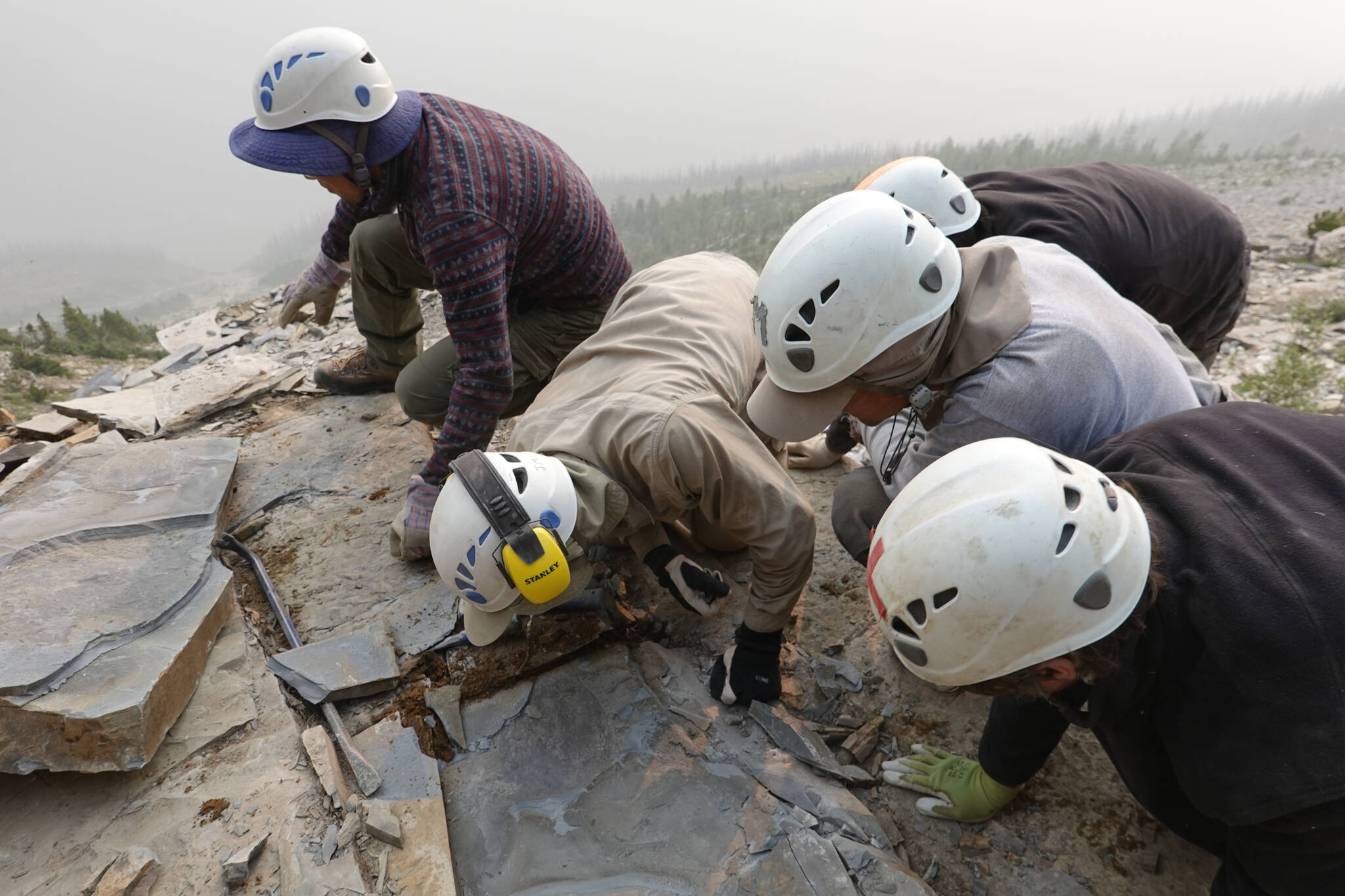 A Royal Ontario Museum fieldwork crew are seen extracting a shale slab containing a fossil of Titanokorys gainesi in the mountains of Kootenay National Park, B.C., in an undated handout photo. (THE CANADIAN PRESS/HO-ROM, Jean-Bernard Caron photo)