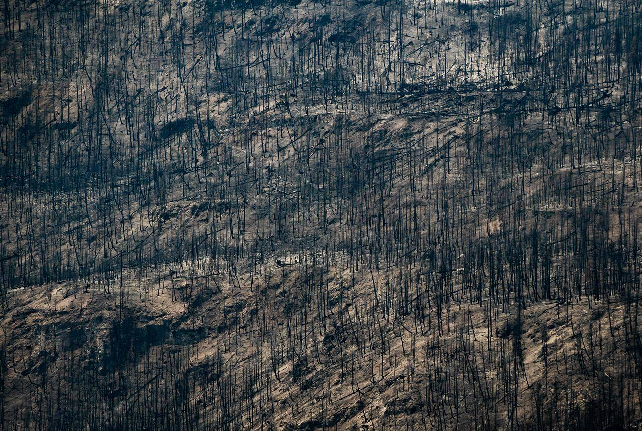 Trees burnt by the White Rock Lake wildfire earlier this month are seen on the side of a mountain in Monte Lake, B.C., on Thursday, Aug. 26, 2021. THE CANADIAN PRESS/Darryl Dyck