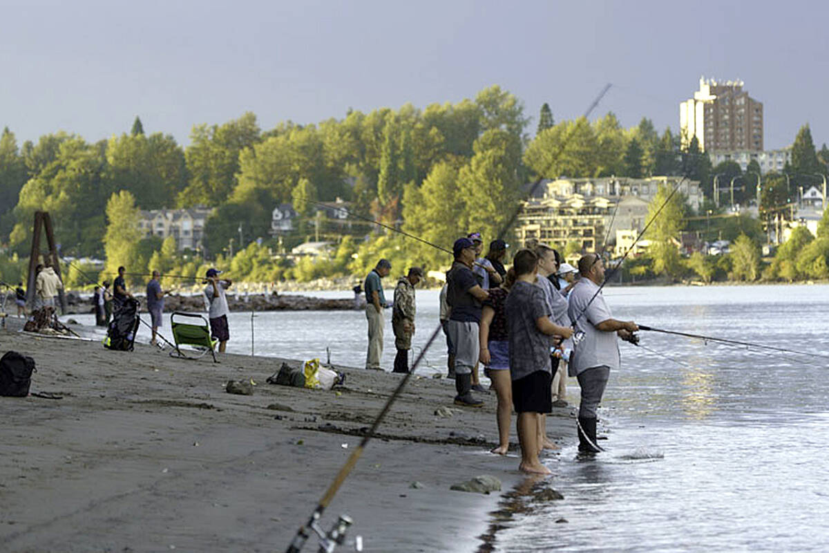 How can one tell the salmon are running along the Fraser River? Just stop by Derby Reach or Bedford Channel near Fort Langley. Lou Fasullo took this pic at Derby Reach on Saturday Sept. 11. (Special to Langley Advance Times)