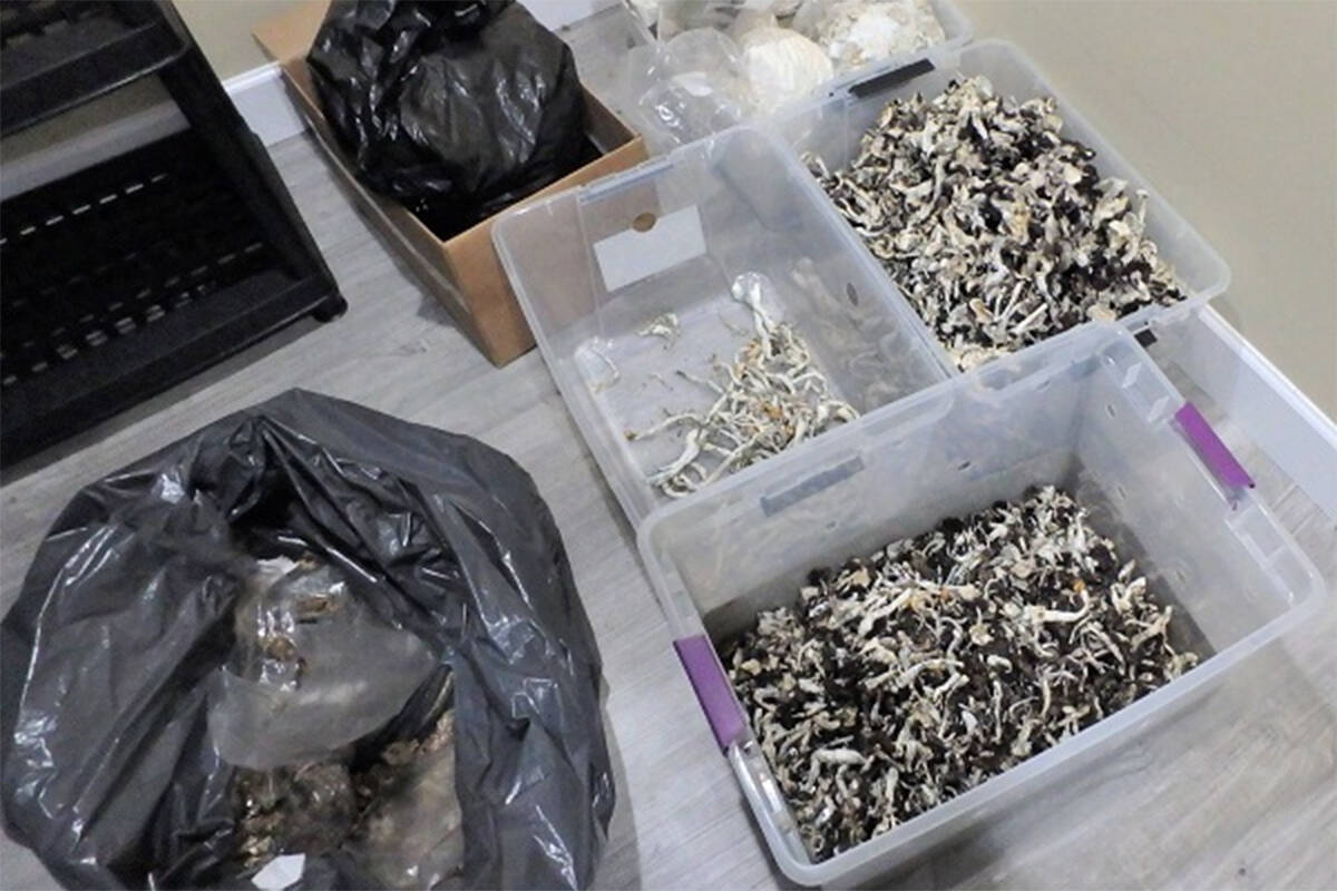 Surrey RCMP seized nearly 30 kilograms of 'magic mushrooms' from a Clayton Heights home. (RCMP handout)