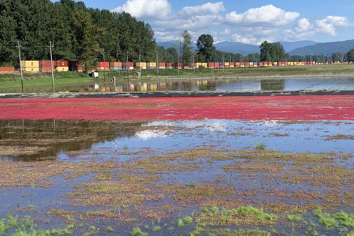Flooded cranberry fields reflect a passing train. (Xinguang Yang/Special to the Langley Advance Times)