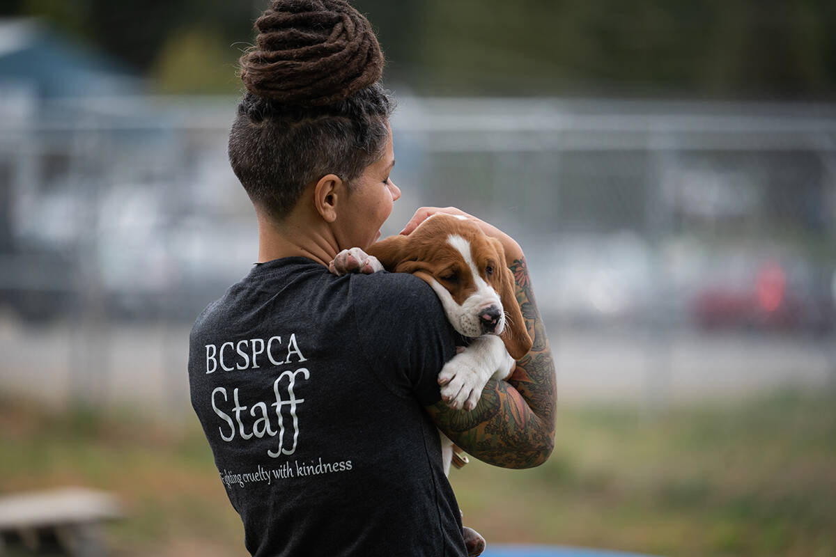 The B.C. SPCA is offering 50 per cent off adoption fees from Sept. 27 to Oct. 6, 2021. (BCSPCA)
