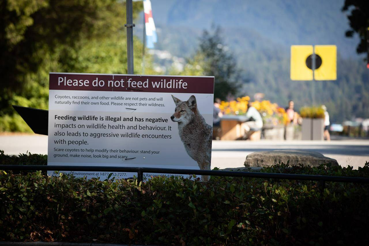 A sign warning people not to feed wildlife is seen at Stanley Park after numerous people were attacked by coyotes, in Vancouver, on Thursday, Sept. 2, 2021. THE CANADIAN PRESS/Darryl Dyck