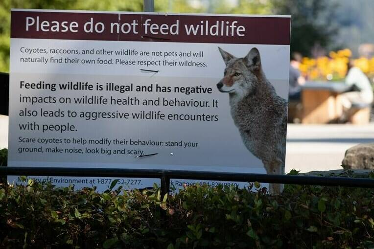 A sign warning people not to feed wildlife is seen at Stanley Park after numerous people have been attacked by coyotes, in Vancouver, on Thursday, Sept. 2, 2021. THE CANADIAN PRESS/Darryl Dyck