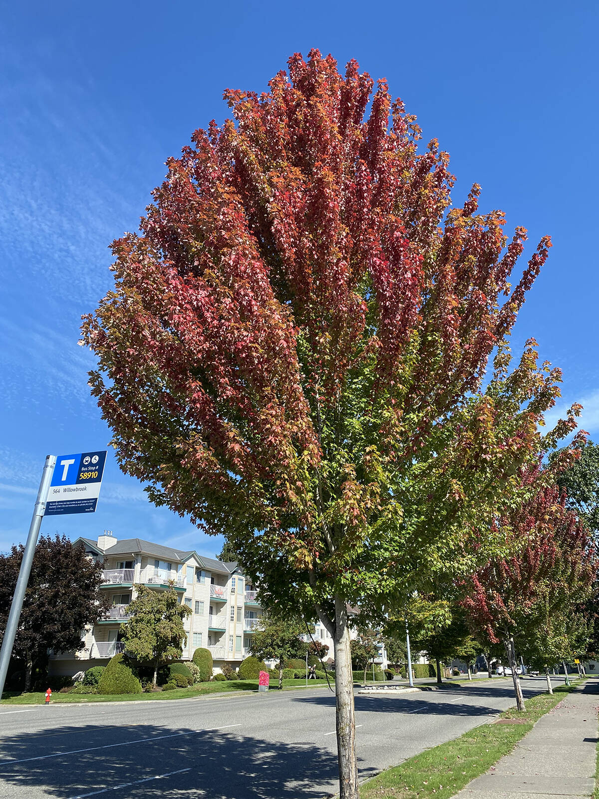 M.J. Kim found a burst of colour in Langley City. (Special to the Langley Advance Times)