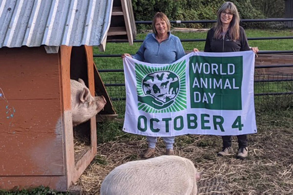 Carolyn Drew, the author of the Roxi book collection, visited Happy Herd Sanctuary on World Animal Day (Carolyn Drew/Special to The Star)