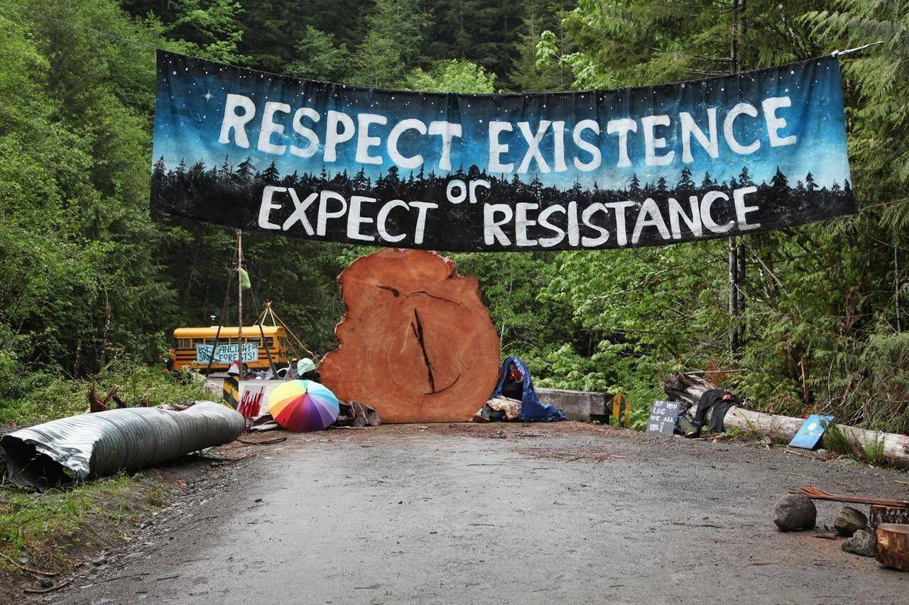 Protesters sit chained to a tree stump at an anti-old-growth-logging blockade in Caycuse, B.C. on Tuesday, May 18, 2021.A British Columbia Supreme judge has denied a forest company's application to extend an injunction against blockades by people opposed to logging old-growth trees in the Fairy creek area of southern Vancouver Island.THE CANADIAN PRESS/Jen Osborne