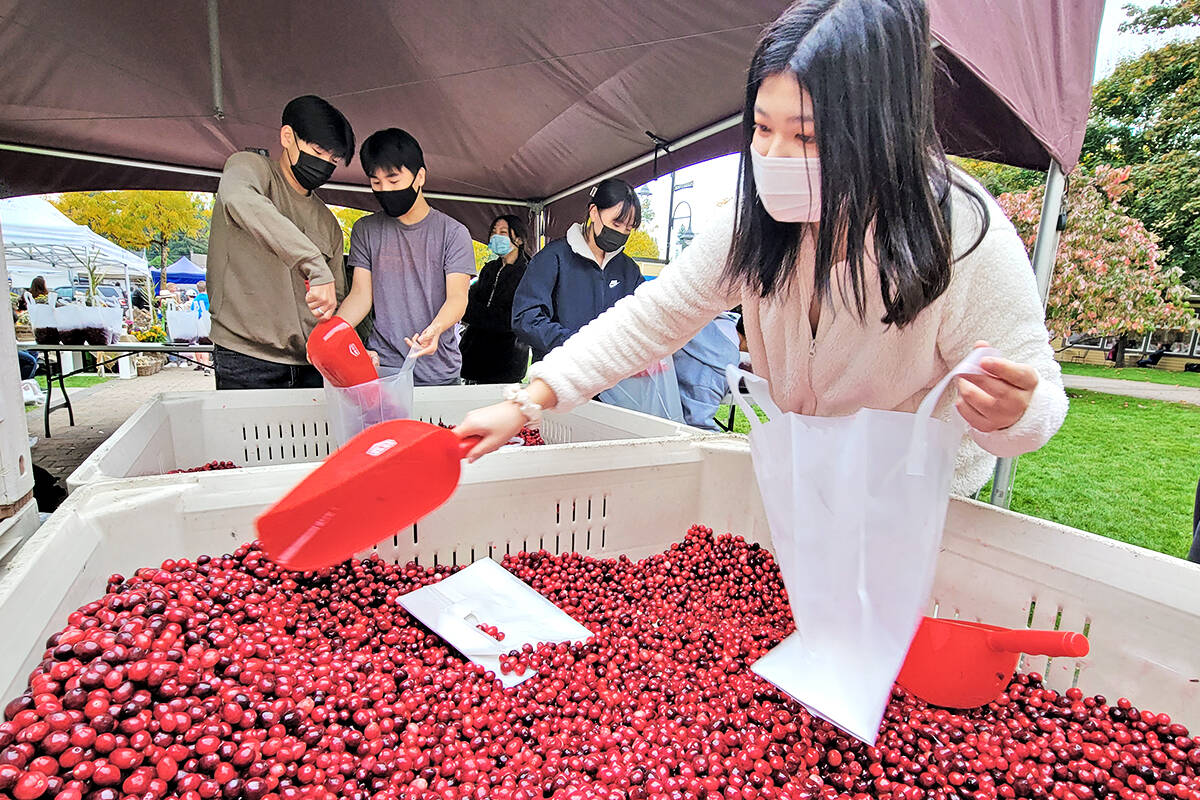 Walnut Grove Secondary School student Youngin Yun (right) and classmates were filling bags with cranberries on the front lawn of the historic Fort Langley community hall as the annual Fort Langley Cranberry Festival on Saturday, Oct. 9. (Dan Ferguson/Langley Advance Times)