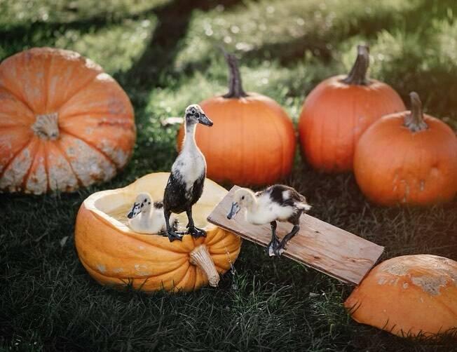 All proceeds from pumpkin sales goes towards the animal rescue program. (Kensington Prairie Farm/Facebook)