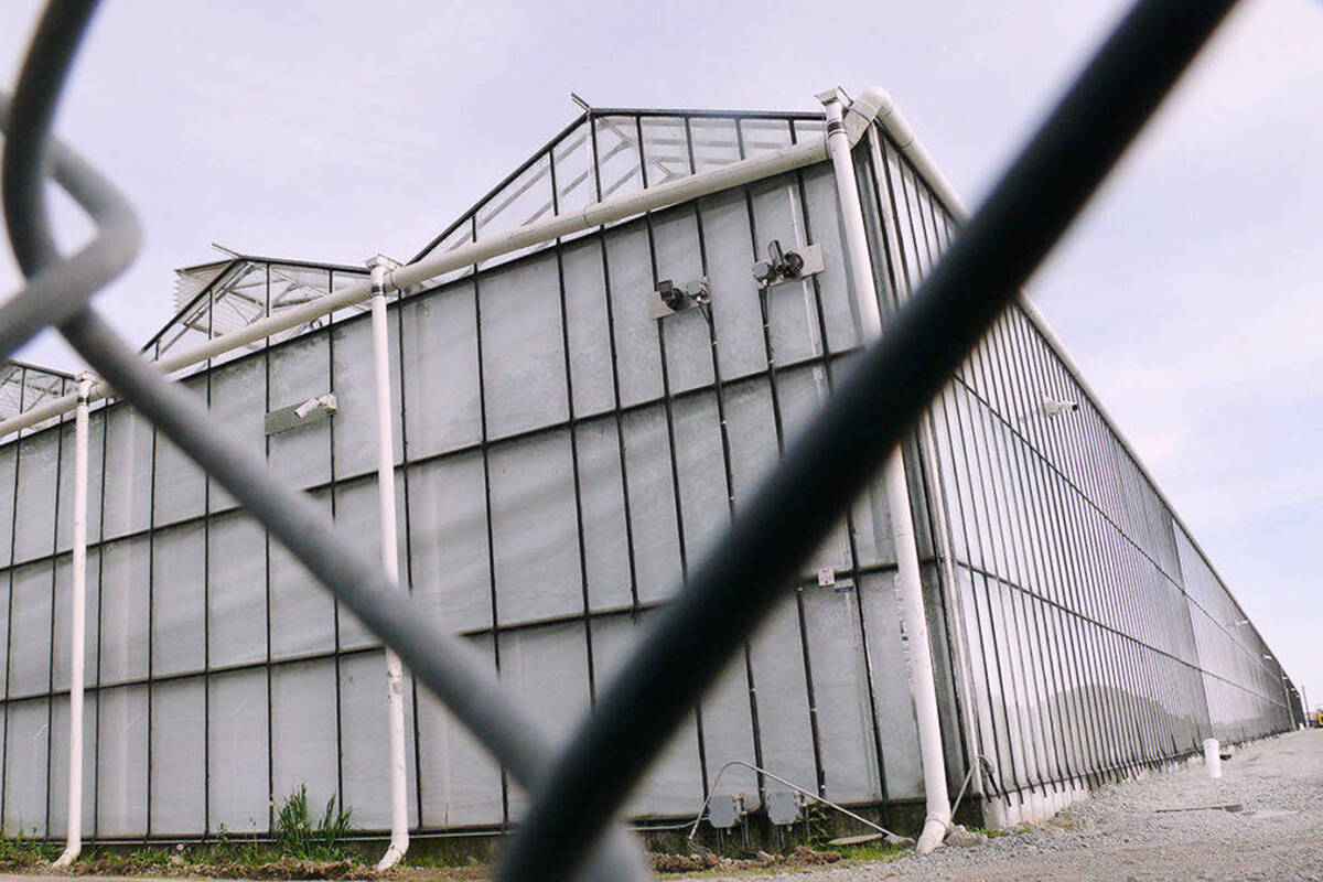 The former Canopy Growth greenhouses in South Aldergrove were the target of many complaints due to odours. (Langley Advance Times file)