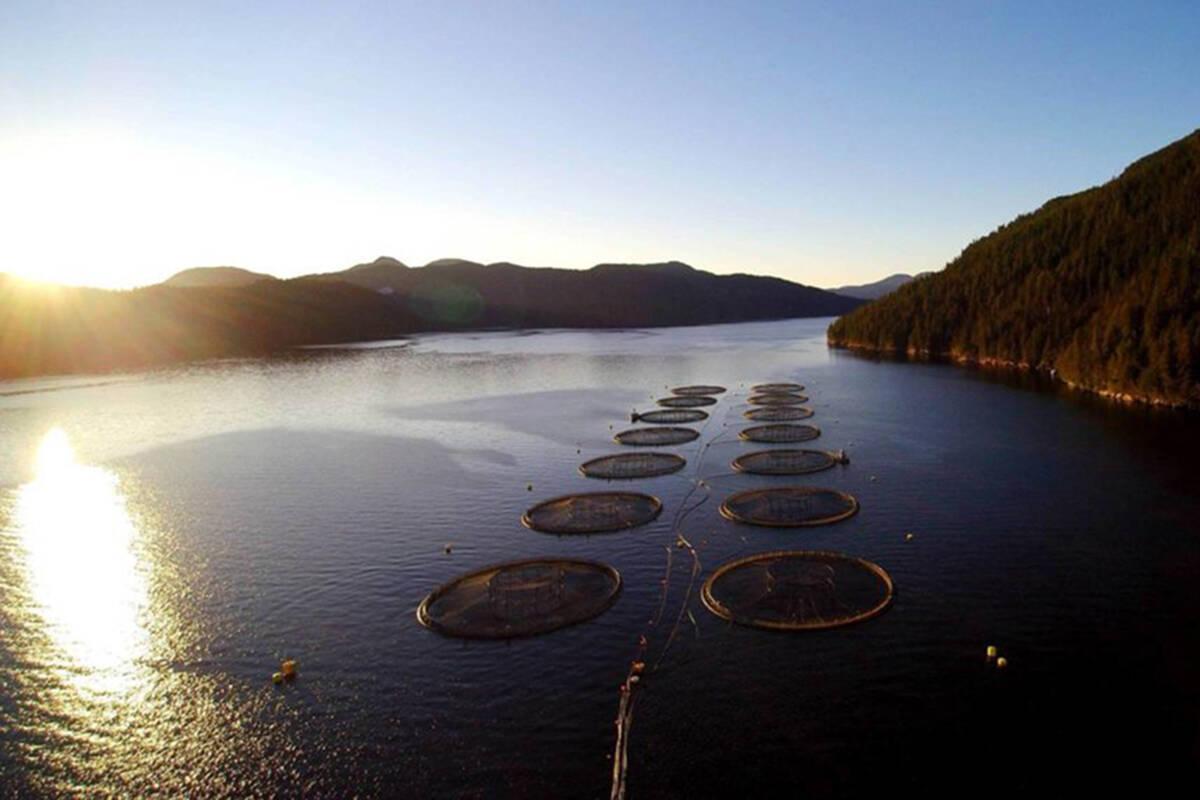 Mowi Canada West salmon farm in B.C. waters. (Photo supplied by Mowi Canada)