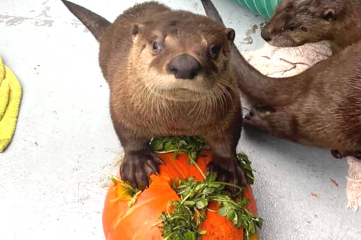 Animals enjoying their Halloween treats (Brandon Dean/Special to The Star)