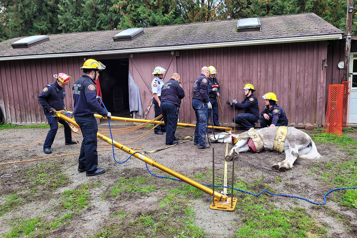 First responders attempting a horse rescue in Maple Ridge. (Neil Corbett/The NEWS)