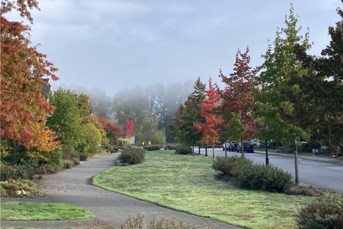 """Wout Brouwer captured a picture of """"beautiful"""" fall colours and fog recently engulfing Singh Street in Fort Langley's Bedford Landing. (Special to Langley Advance Times)"""