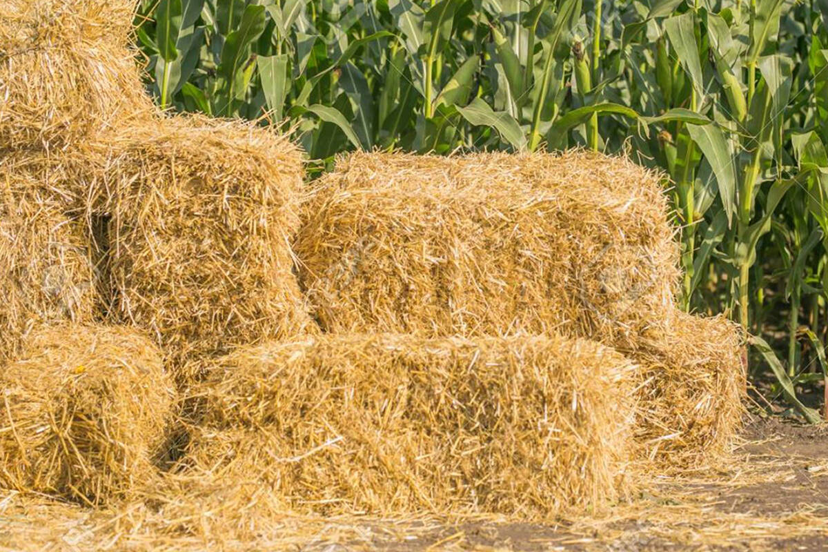 Hay bales can be donated to Critter Care Wildlife Society (Critter Care/Special to The Star)