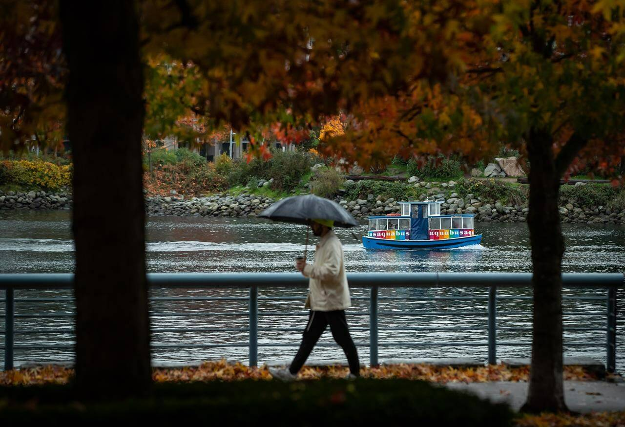 An Aquabus water taxi travels on False Creek as a person holds an umbrella while walking under fall foliage on the seawall, in Vancouver, on Saturday, Oct. 23, 2021. THE CANADIAN PRESS/Darryl Dyck